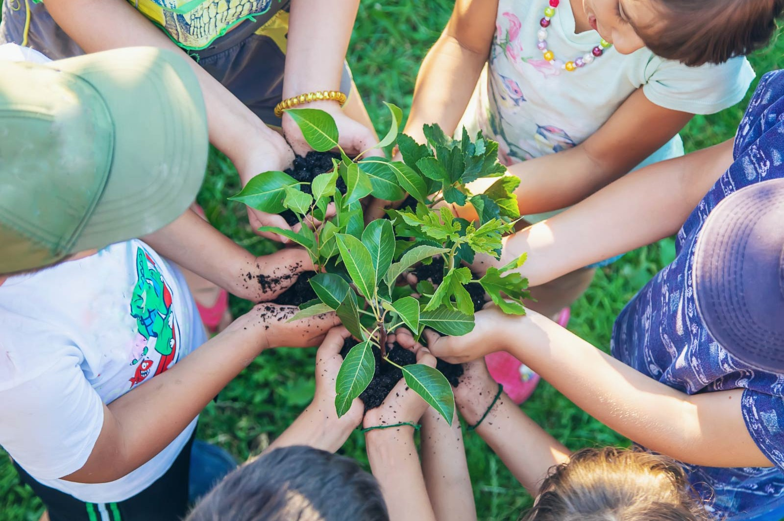Children joined together to hold plants